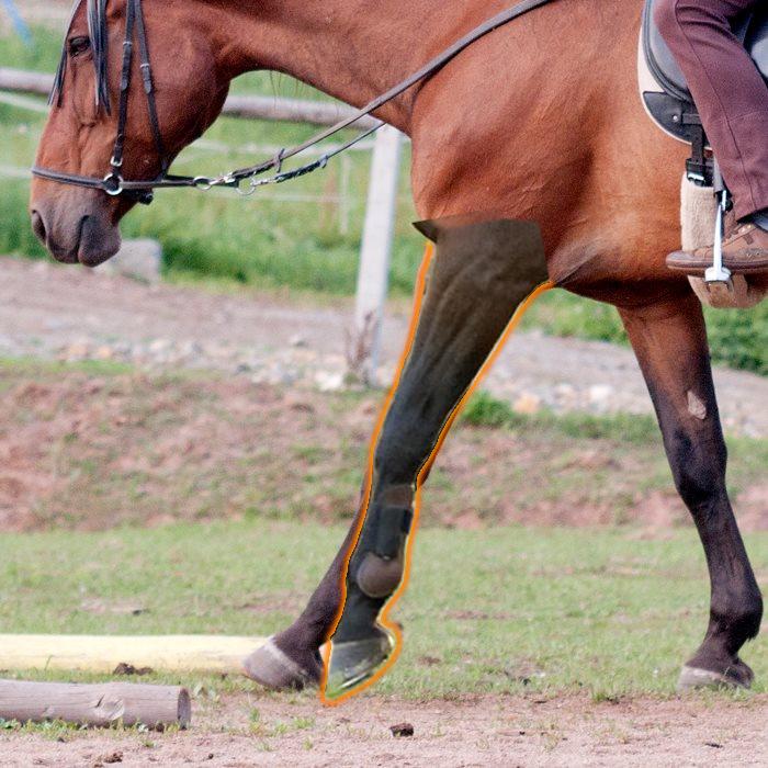 Jak powinien poruszać się Twój koń? cz.4