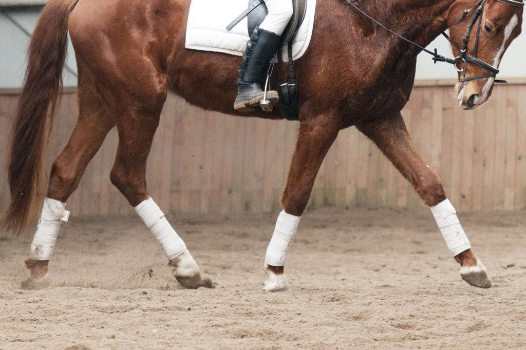 Koń stawiający kopyta od palca.