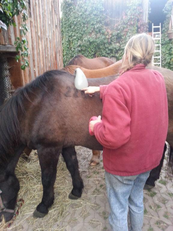Próba dopasowania łęku w czasie naszych warsztatów Konie i My.